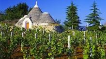 vigne-puglia